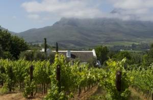 Paysage typique du Cap Occidental : vignes, architecture boer et chaîne de montagne.  Crédit : Office de tourisme sud-africain.