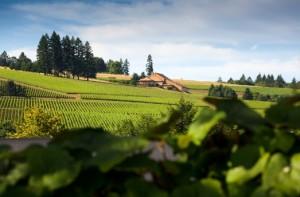 Le premier domaine Drouhin dans l'Oregon. Acheté en 1987, il s'étend sur 50 hectares et réalise 10 millions de $ de chiffre d'affaires..